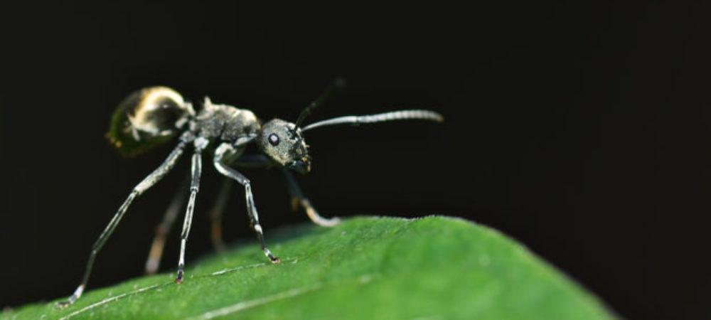 Schlafen Ameisen Spick